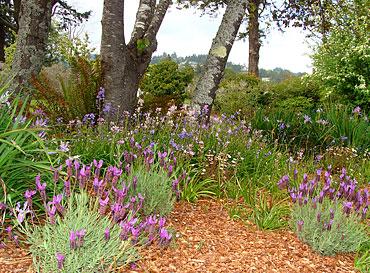 Manley_Garden