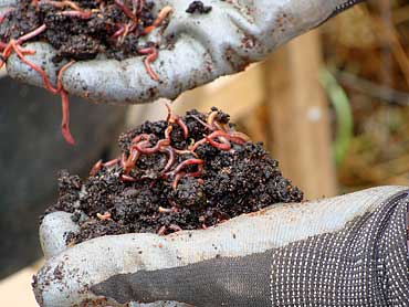 K-School_Vermicomposting