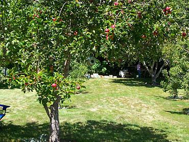 Clark-apples