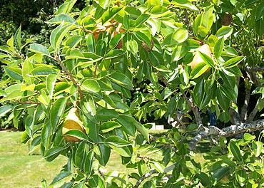 Clark-Pears