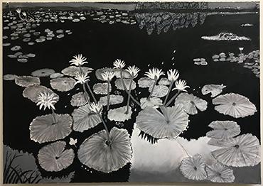 Horsting  Archana_Water Lilies_IMG_5757.jpeg