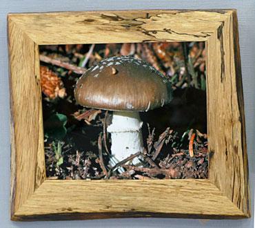 I-DA-HM-Mushroom-Hal-Panter